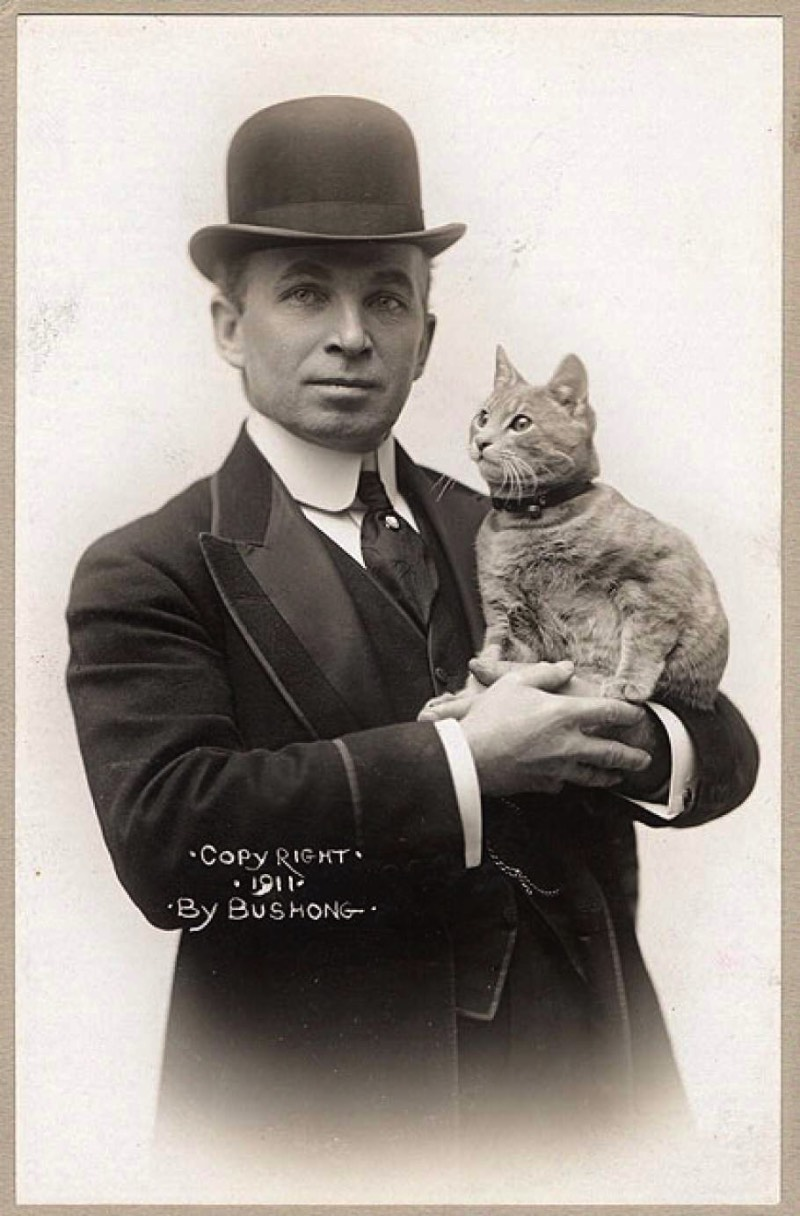 Foi em outubro de 1910 que Kiddo se tornou o primeiro gato a tentar atravessar o oceano Atlântico e ele nem sabia que esse era o programa para aquele dia. Foi uma surpresa para todos, aliás.
